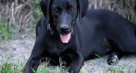 Mơ thấy chó đen là điềm báo gì – Đánh con số lô đề nào?