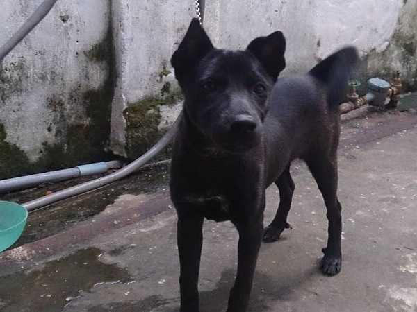Điềm báo trong giấc mơ thấy chó đen