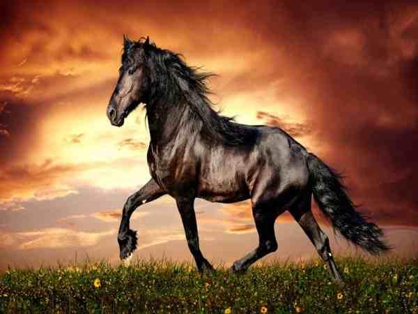 Mơ thấy con ngựa là điềm báo gì, đánh số mấy chắc ăn trúng thưởng?