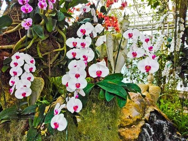 Giải mã giấc mơ thấy hoa lan là điềm báo gì đánh số đề nào