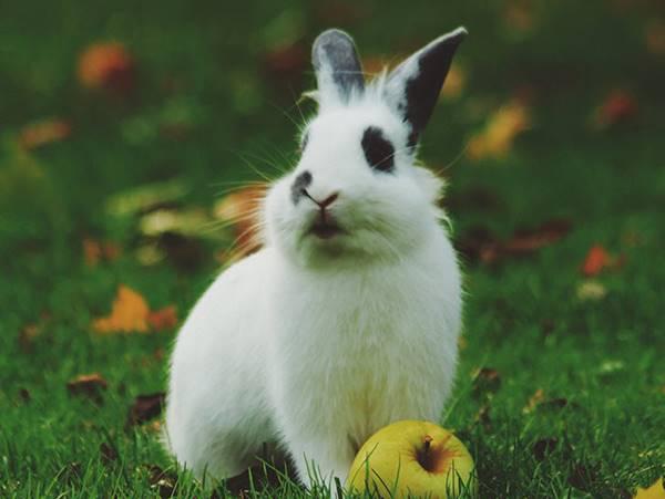 Mơ thấy thỏ đánh tất tay cặp số nào khả năng đổi đời?