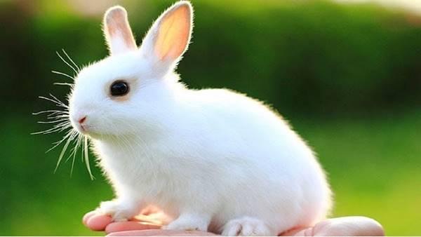 Nằm mơ thấy con thỏ trắng đánh số mấy đánh lô đề con gì