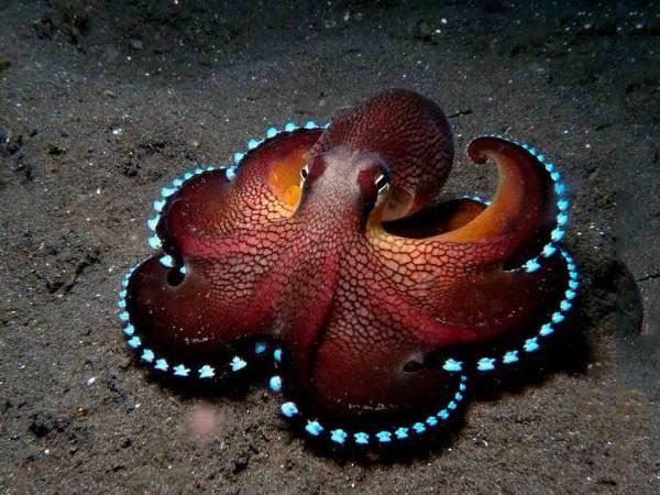 Mơ thấy bạch tuộc là dự cảm về điều gì? Đánh con số mấy?