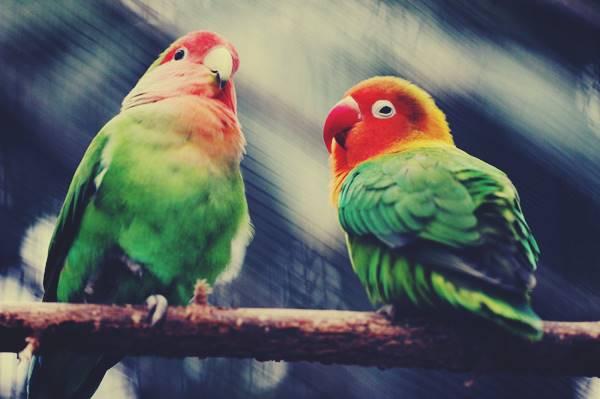 Giải mã giấc mơ thấy con vẹt là chiêm bao điềm báo gì