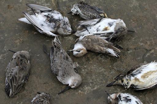 Mơ thấy chim chết đánh con gì